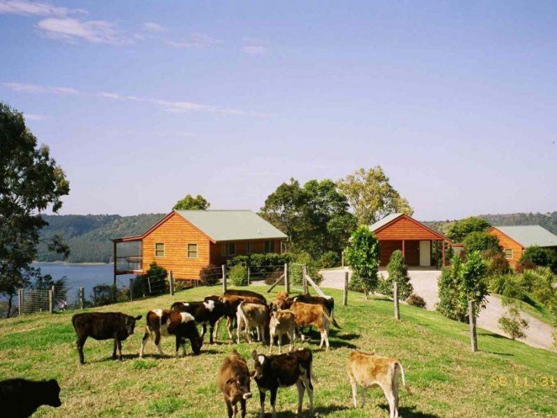 Cottages-Cows-1024x679