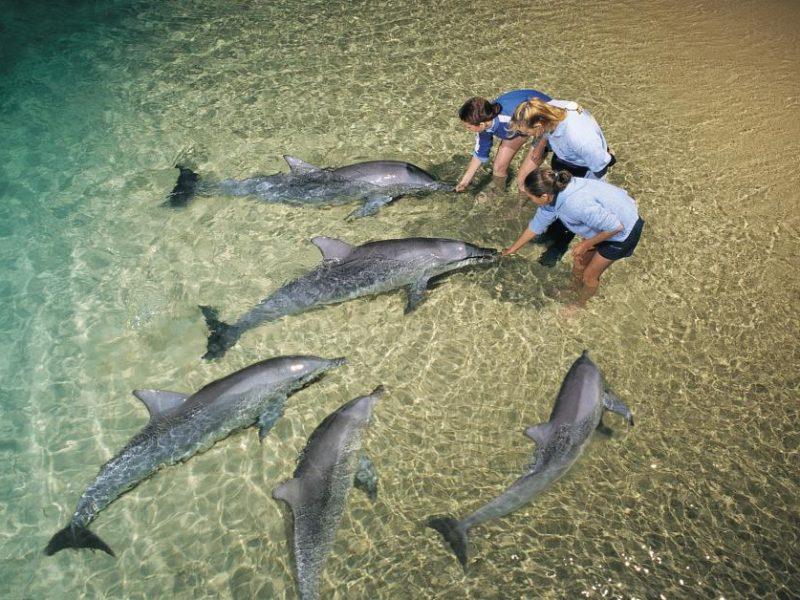 dolphin-feeding-9362