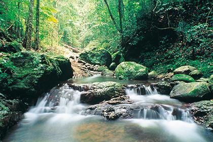 030630Lamington National Park - Waterfall, Gold Coast