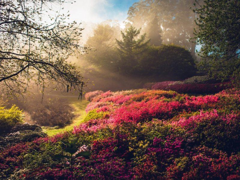 botanic-gardens-sunrise