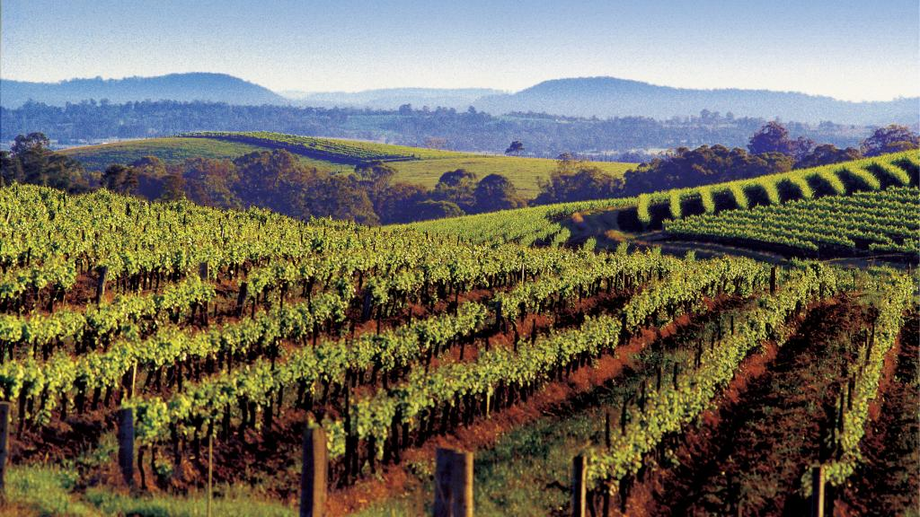 hunter-valley-winery-32768-ws